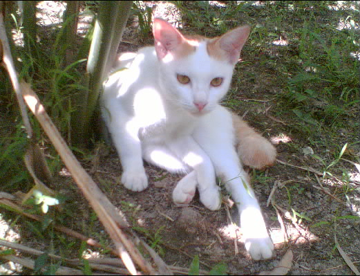 KittySittingOutside027-002.jpg