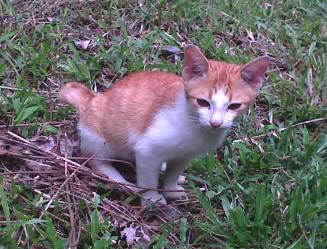 KittybrownDSC00004001.jpg