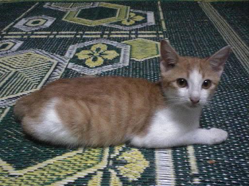 KittyDSC00001-001.jpg