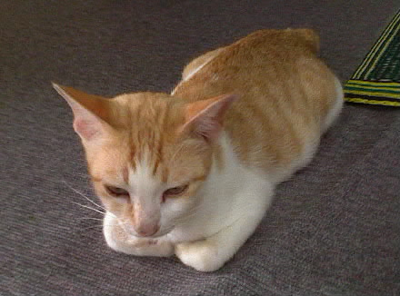 CatDSC00007-001.jpg