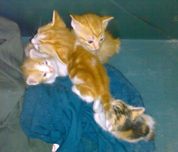 Newbornkittens07052012685-001.jpg