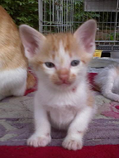 KittyDSC00006-001.jpg