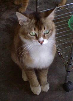 catdsc00003-0011.jpg